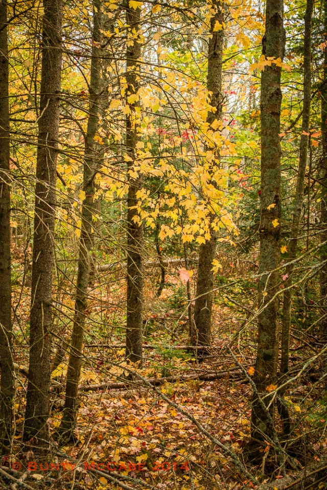 Confederation Trail, Uigg